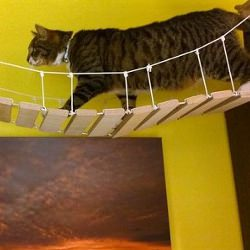 Picture Of Bristol man makes mini Clifton Suspension Bridge for his cat